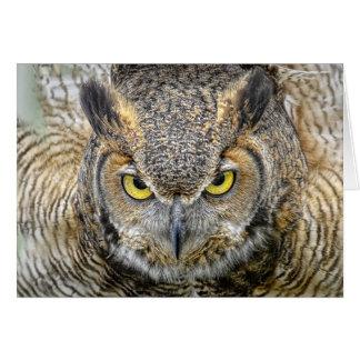 Great Horned Owl Following Eyes Card