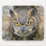Great Horned Owl Following Eyes Mouse Pads