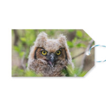 Great Horned Owl Gift Tags
