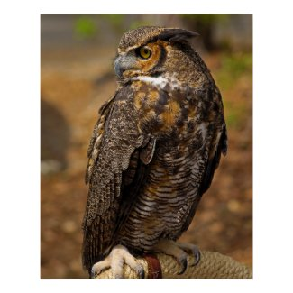Great Horned Owl - Great Big Poster