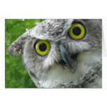 Great-Horned Owl Greeting Cards