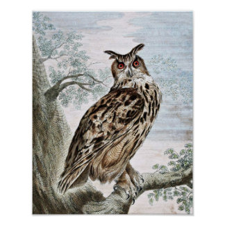 Great Horned Owl Illustration PostersGreat Horned Owl Illustration