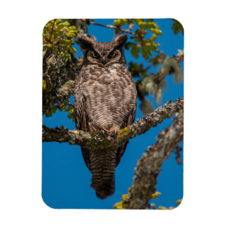 Great horned owl in a garry oak rectangle magnets
