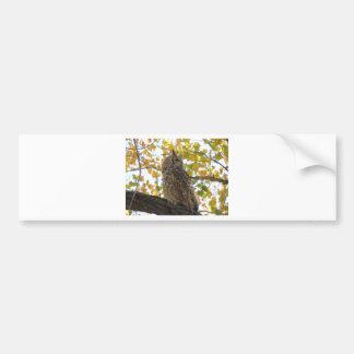 Great Horned Owl in a Tree Car Bumper Sticker