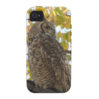 Great Horned Owl in a Tree Case-Mate iPhone 4 Case