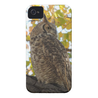 Great Horned Owl in a Tree Case-Mate iPhone 4 Cases