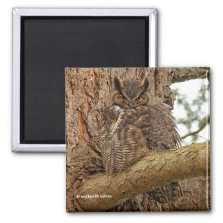 Great Horned Owl in the Douglas Fir Magnet