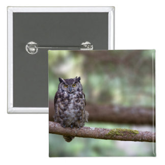 Great Horned Owl in the Old growth Pins