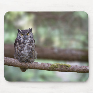Great Horned Owl in the Old growth Mouse Pad