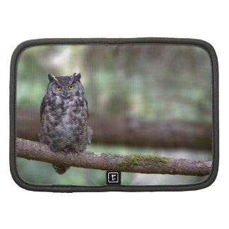 Great Horned Owl in the Old growth Planner