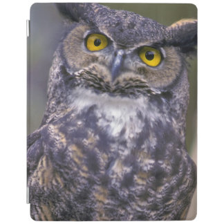 Great Horned Owl iPad Smart Cover