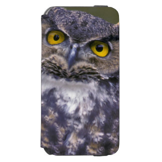 Great Horned Owl iPhone 6/6s Wallet Case