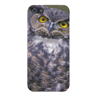 Great Horned Owl iPhone 5/5S Cover