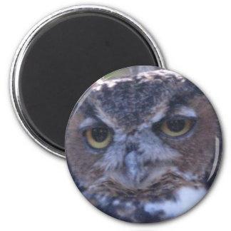 Great Horned Owl magnet