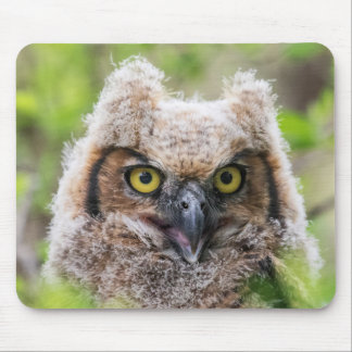 Great Horned Owl Mouse Pad
