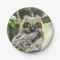 Great Horned Owl Paper Plate