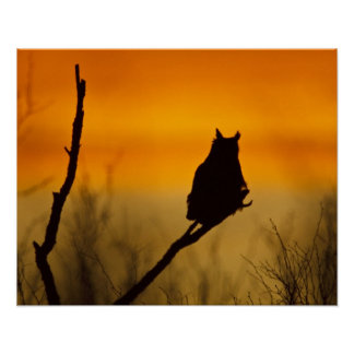 Great Horned Owl perched at sunset Poster