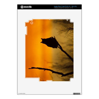 Great Horned Owl perched at sunset Decal For iPad 3