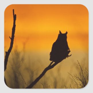 Great Horned Owl perched at sunset Square Sticker