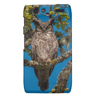 Great Horned Owl perched on a Garry Oak Motorola Droid RAZR Covers
