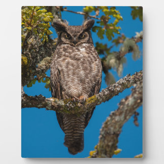 Great Horned Owl perched on a Garry Oak Photo Plaque