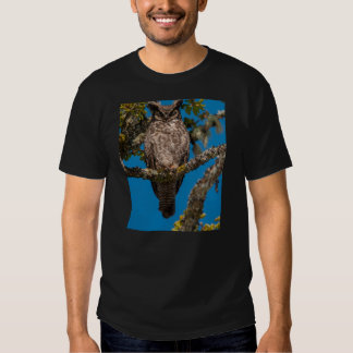Great Horned Owl perched on a Garry Oak Tees