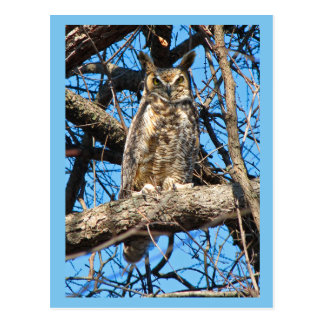 Great Horned Owl Photo Postcard