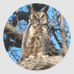 Great Horned Owl Photo Round Stickers