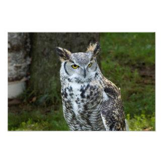 Great Horned Owl Photo Art