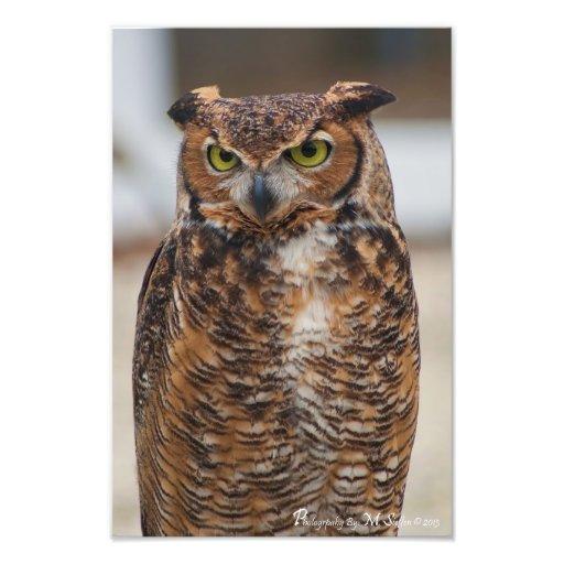 Great Horned Owl Art Photo