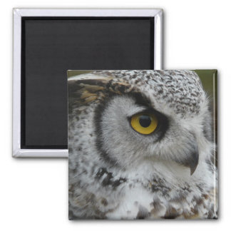 Great Horned Owl Photograph 2 Inch Square Magnet