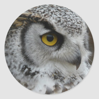 Great Horned Owl Photograph Classic Round Sticker