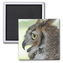 Square Magnet with Great Horned Owl Portraits design