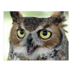 Postcard with Great Horned Owl Portraits design
