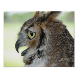 Matte Poster with Great Horned Owl Portraits design