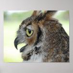 Great Horned Owl Portrait Print