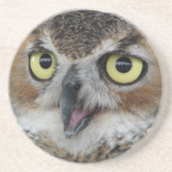 Sandstone Drink Coaster with Great Horned Owl Portraits design