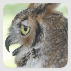 Great Horned Owl Portraits Square Sticker