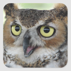 Square Sticker with Great Horned Owl Portraits design