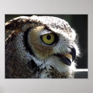 Great Horned Owl Poster