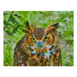Great Horned Owl Print or Poster