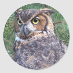 Great Horned Owl Round Sticker