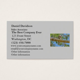 Great Horned Owl Sleeping Photo Business Card