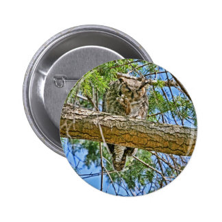 Great Horned Owl Sleeping Photo Pins