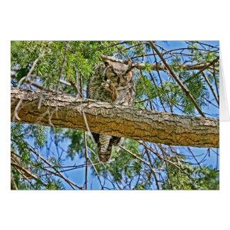 Great Horned Owl Sleeping Photo Card