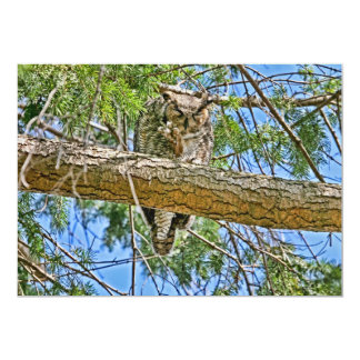 Great Horned Owl Sleeping Photo Card