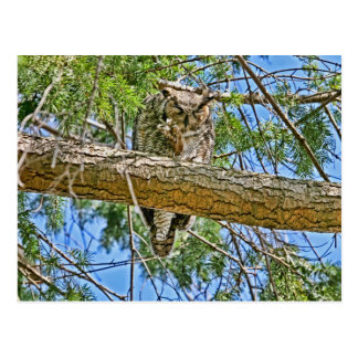 Great Horned Owl Sleeping Photo Postcard