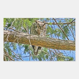 Great Horned Owl Sleeping Photo Rectangular Sticker