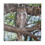 "Great Horned Owl small Ceramic Photo Tile<br><div class=""desc"">This is a photo design of a Great Horned Owl that was seen sitting in a tree in the day time.</div>"