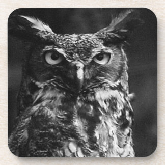 Great Horned Owl Square Coasters